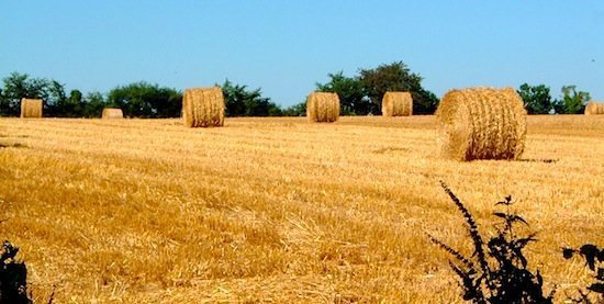 Harvest time in neighbouring fields